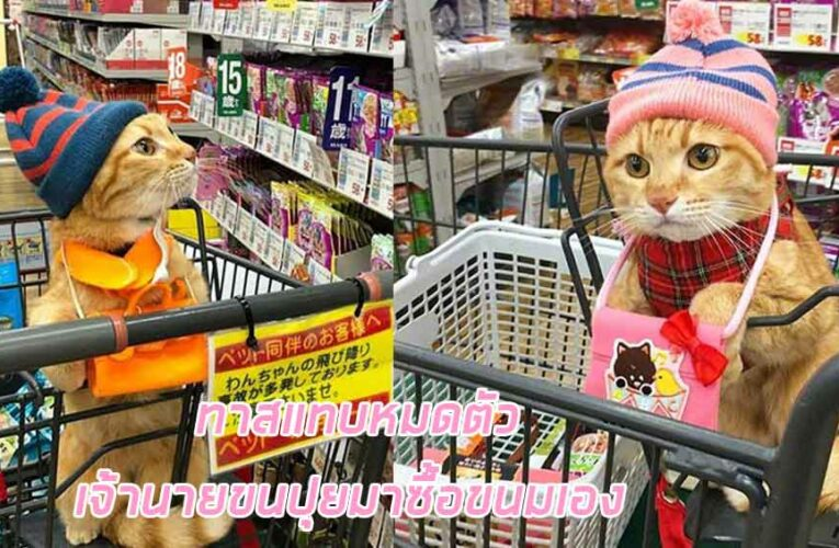 ทาสแมวแทบหมดตัว หลังจากเจ้าปุยออกมาเลือกซื้อขนมเอง