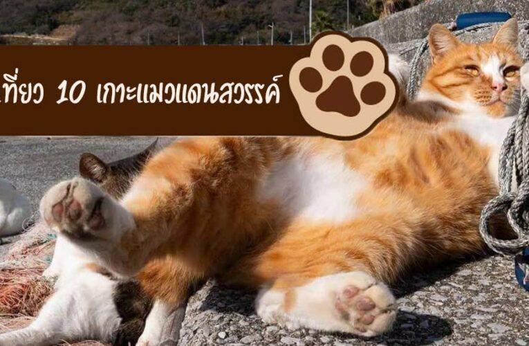พาเที่ยว 10 เกาะแมวแดนสวรรค์ของเหล่าทาสแมวที่มาแล้วจะต้องฟิน