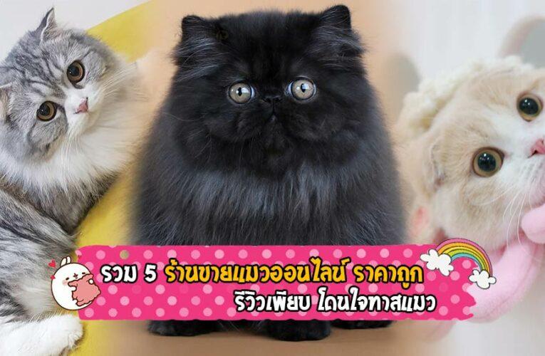 รวม 5 ร้านขายแมวออนไลน์ ราคาถูก รีวิวเพียบ โดนใจทาสแมว