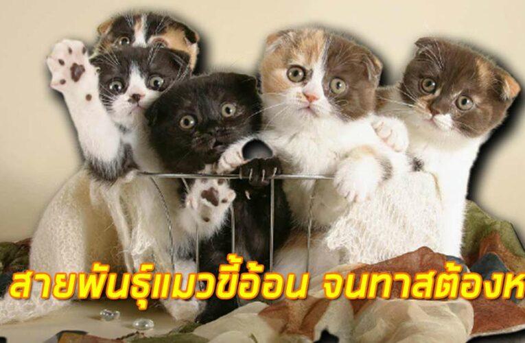 15 สายพันธุ์แมวขี้อ้อน จนทาสต้องหลง