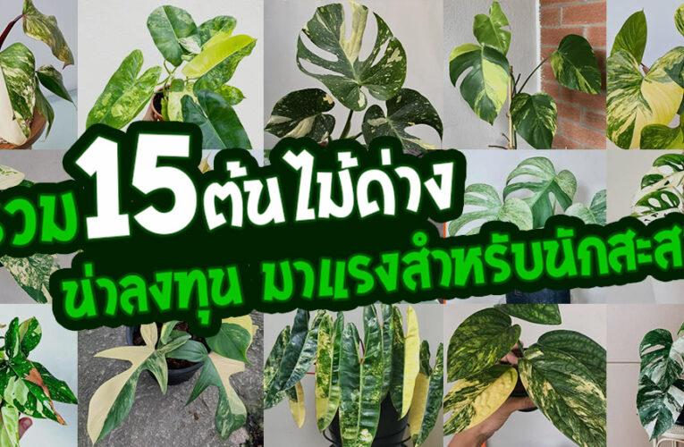 รวม 15 ต้นไม้ด่าง น่าลงทุน มาแรงสำหรับนักสะสม